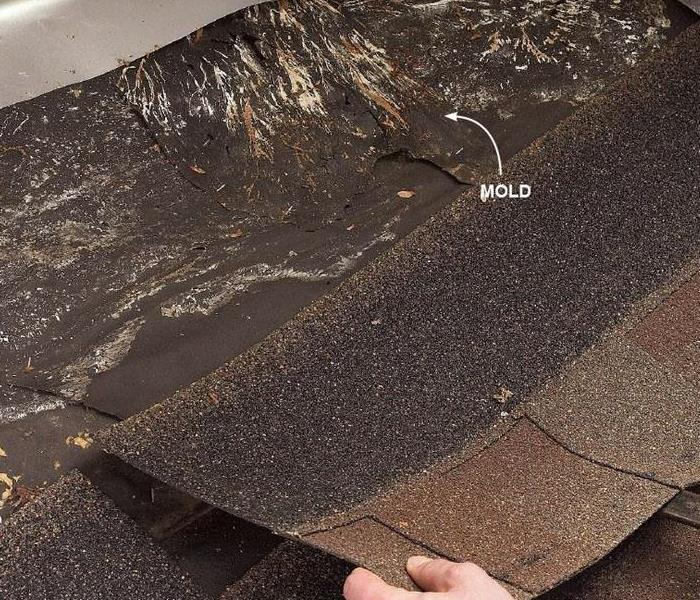 Water Damage 5 Early Signs of Water Damage in Roofing Systems