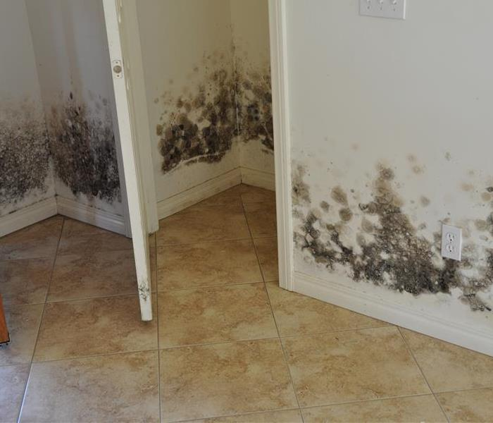 Mold Remediation Does Your Glendale Home Have A Mold Problem?