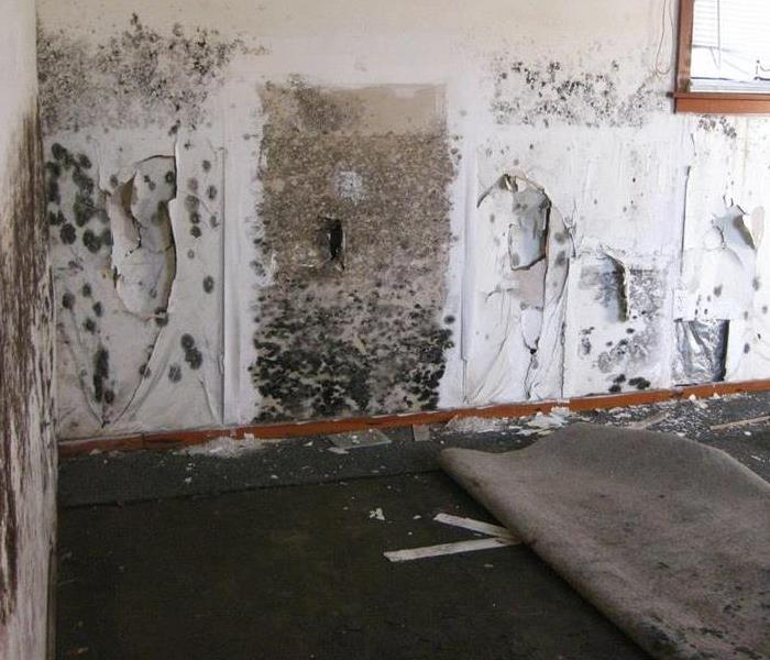 Mold Remediation Mold 101