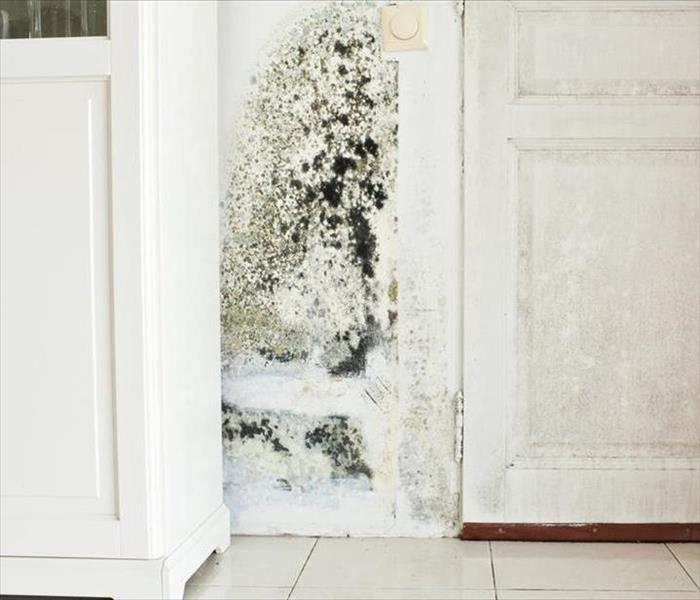 Mold Remediation Residents:  Follow These Mold Safety Tips If You Suspect Mold